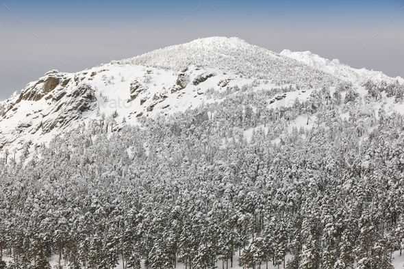 Winter mountain forest snowy landscape. Navacerrada, Spain. Horizontal - Stock Photo - Images