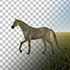 Walking Horse 4K - VideoHive Item for Sale