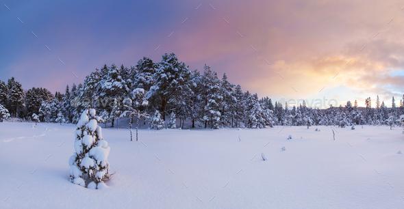 beautiful winter landscape snow tree - Stock Photo - Images