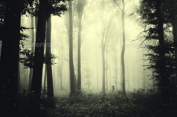 Mysterious dark forest with fog and strange light through trees - Stock Photo - Images