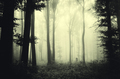 Mysterious dark forest with fog and strange light through trees - PhotoDune Item for Sale