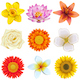Vector Flower Icons Set 2