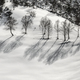 Birches on the snow - PhotoDune Item for Sale