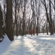 Adorable Boy Run in Winter Park - VideoHive Item for Sale