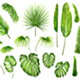 Vector Set of Tropical Leaves - GraphicRiver Item for Sale