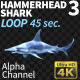 Hammerhead Shark 3 Long Path - VideoHive Item for Sale