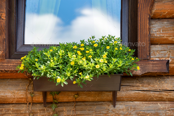 Windows with flower boxes - Stock Photo - Images