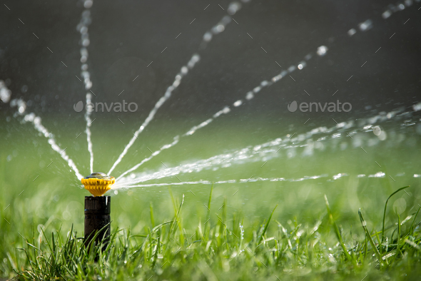 Sprinkler in action watering grass - Stock Photo - Images