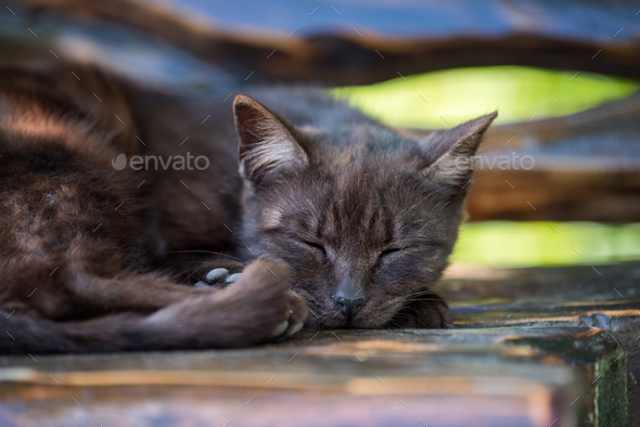Cat sleeping on the wooden bench - Stock Photo - Images