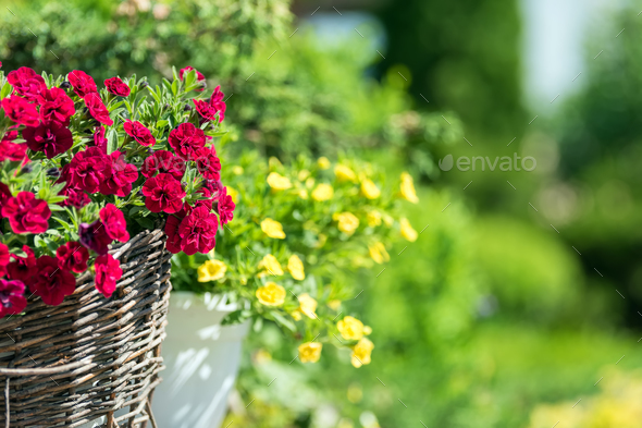 Bright flowers on streets - Stock Photo - Images