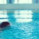 Portrait of a Professional Swimmer Boy in the Pool. Exercise in the Pool - VideoHive Item for Sale