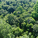 Flyover Jungle Forest Trees - VideoHive Item for Sale