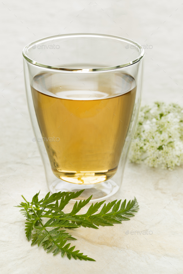 Glass of tea with a twig of fresh cow parsley - Stock Photo - Images