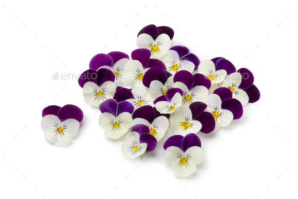 Fresh picked viola flowers - Stock Photo - Images