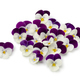 Fresh picked viola flowers - PhotoDune Item for Sale