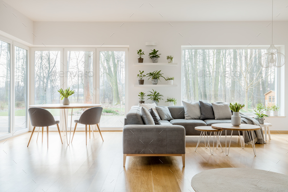 Plants in natural apartment interior - Stock Photo - Images