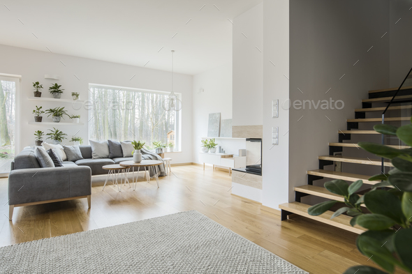 White living room interior with grey corner couch, fresh green p - Stock Photo - Images