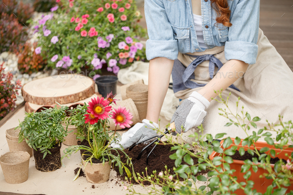Woman planting flowers - Stock Photo - Images