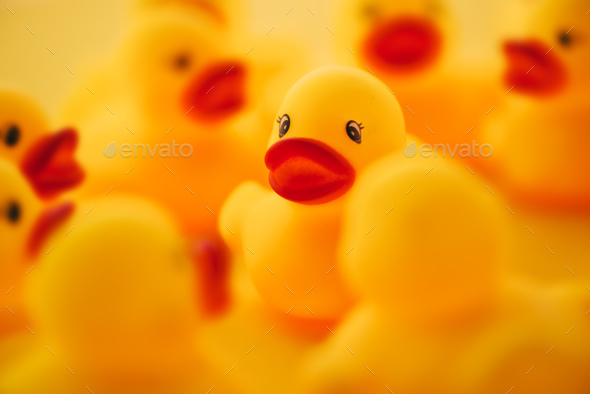Group of rubber ducks chatting - Stock Photo - Images