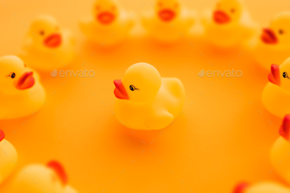 Rubber ducks in leadership concept - Stock Photo - Images