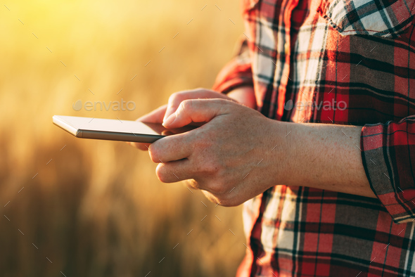 Female farmer standing in wheat field and using mobile phone - Stock Photo - Images