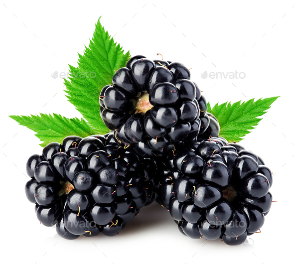 Fresh blackberries with leaves close-up isolated on a white background. - Stock Photo - Images