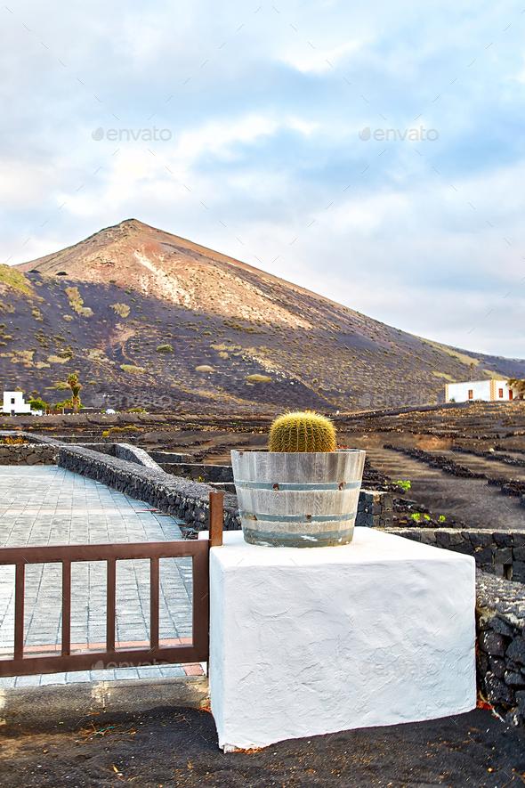 Vineyards in La Geria, Lanzarote Island - Stock Photo - Images