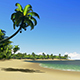 Beach With Palm Trees - VideoHive Item for Sale