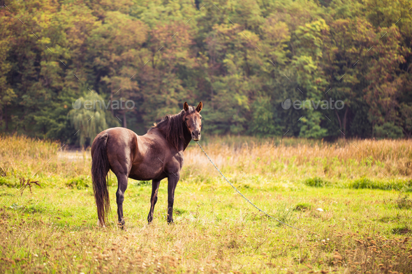 Horse on nature. Portrait of a horse, brown horse - Stock Photo - Images