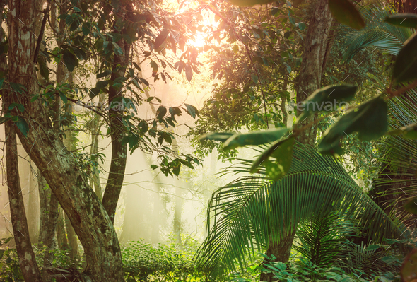 Jungle in Costa Rica - Stock Photo - Images