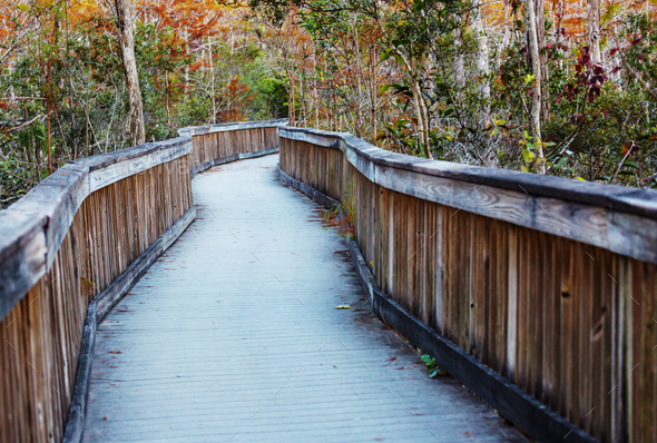 Boardwalk in Everglades - Stock Photo - Images