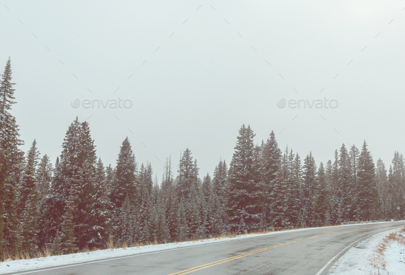 Winter road - Stock Photo - Images