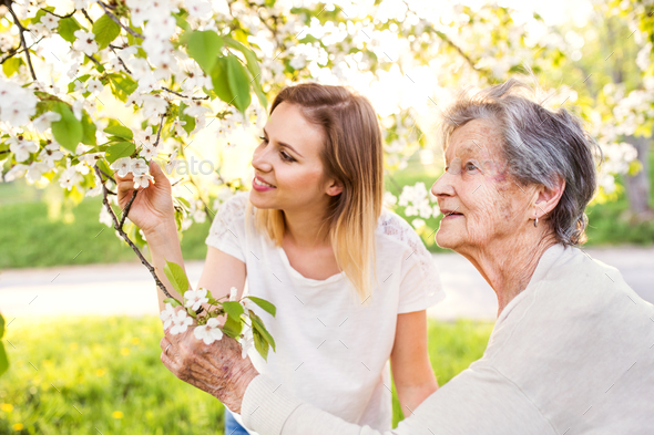 Elderly grandmother and granddaughter under the tree in spring nature. - Stock Photo - Images