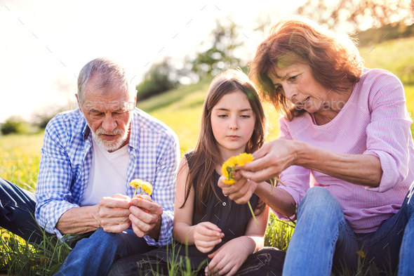 Senior couple with grandaughter outside in spring nature, making dandelion wreath. - Stock Photo - Images