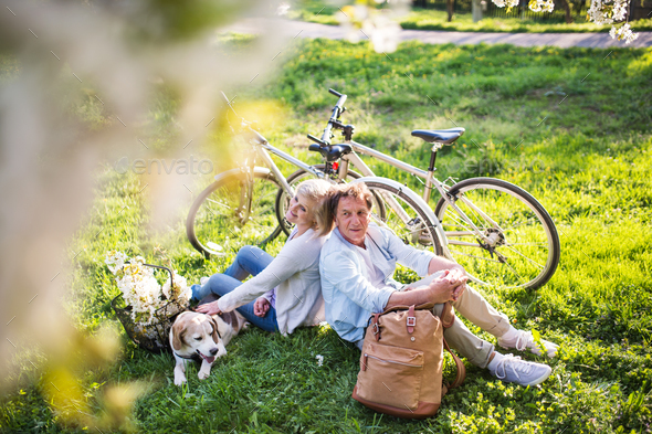 Beautiful senior couple with dog and bicycles outside in spring nature. - Stock Photo - Images