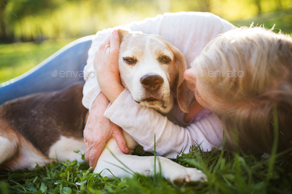 Unrecognizable senior woman with dog in spring nature. - Stock Photo - Images