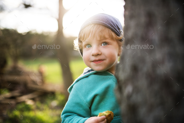 A happy toddler boy hiding behind tree outside in spring nature. - Stock Photo - Images