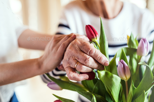 Hands of an old and young woman putting flowers in a vase. - Stock Photo - Images