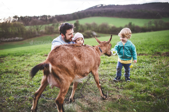 A father and his toddler children with a goat outside in spring nature. - Stock Photo - Images