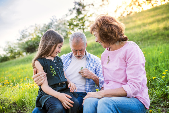 Senior couple with grandaughter outside in spring nature, relaxing on the grass. - Stock Photo - Images