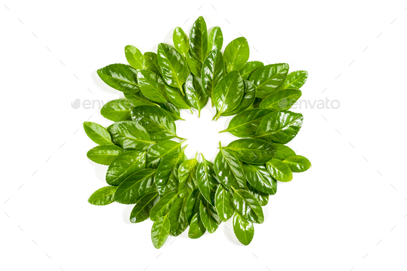 A circle of fresh green leaves of the Beresket plant. Isolated o - Stock Photo - Images