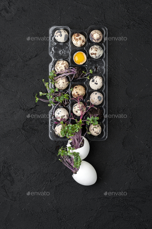 Palette with fresh quail eggs and watercress on a black backgrou - Stock Photo - Images