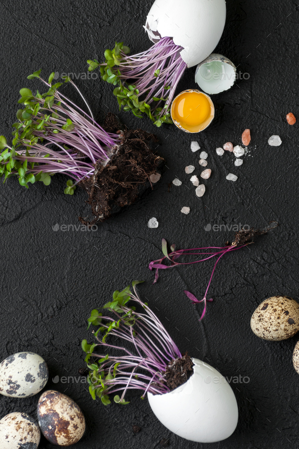 Fresh quail eggs and watercress on a black background. - Stock Photo - Images