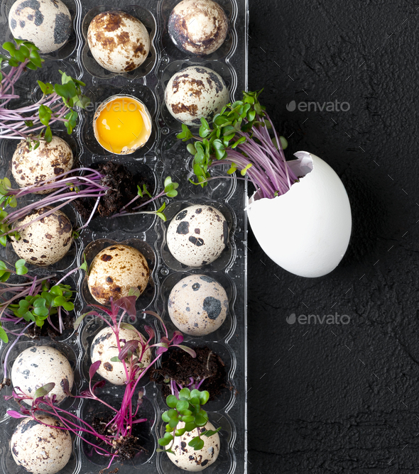 Palette with fresh quail eggs and watercress on a black textured - Stock Photo - Images