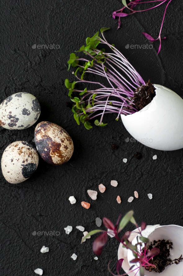 Fresh cress-salad in a scrambler from eggs on a black background - Stock Photo - Images