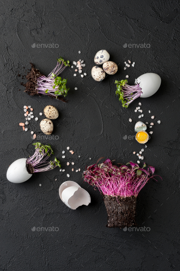 Fresh chicken and quail eggs and watercress on a black textured - Stock Photo - Images