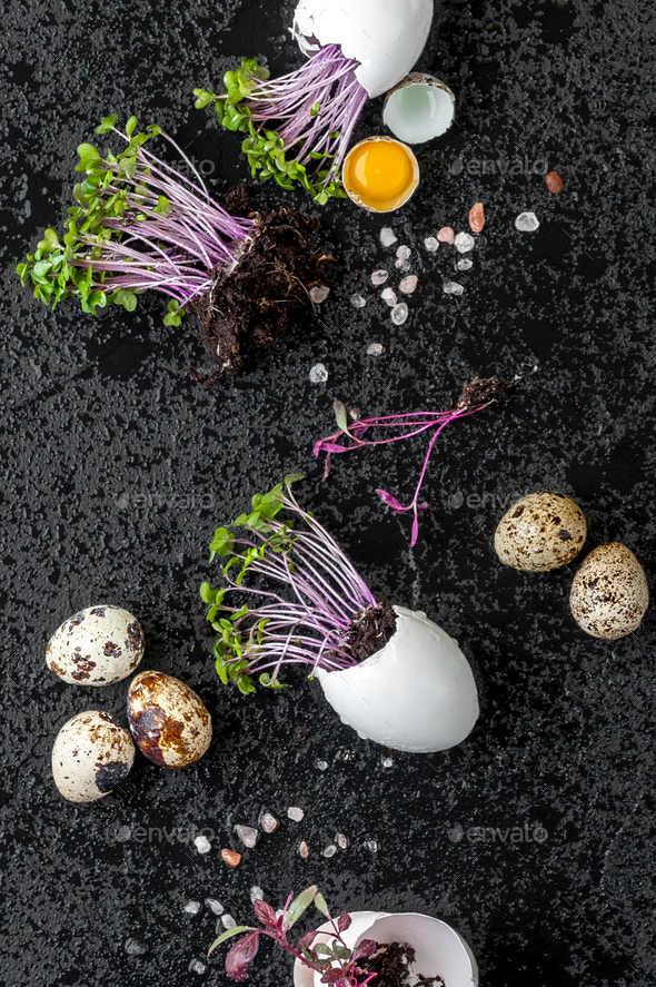 Fresh watercress salad in eggshell and quail eggs on a wet black - Stock Photo - Images