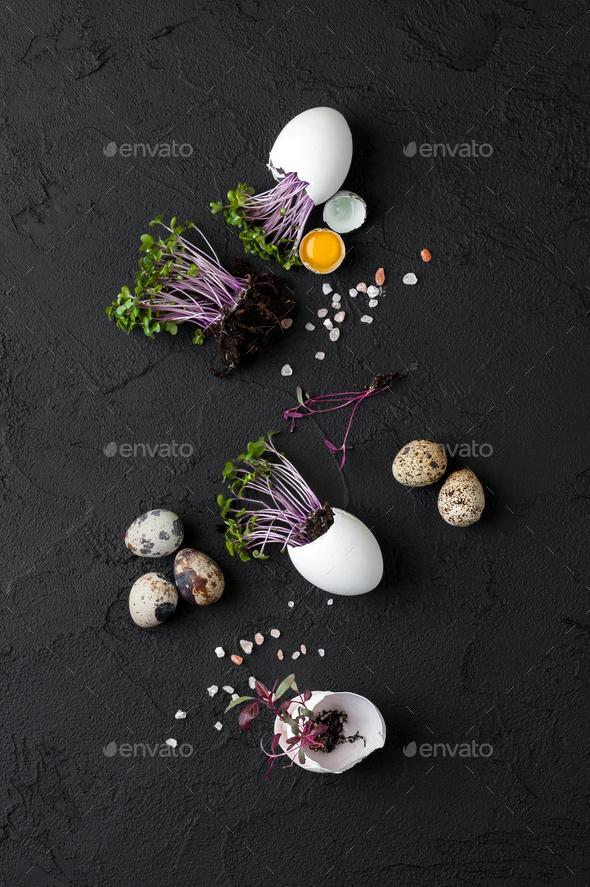 Fresh watercress salad in eggshell and quail eggs on a black bac - Stock Photo - Images