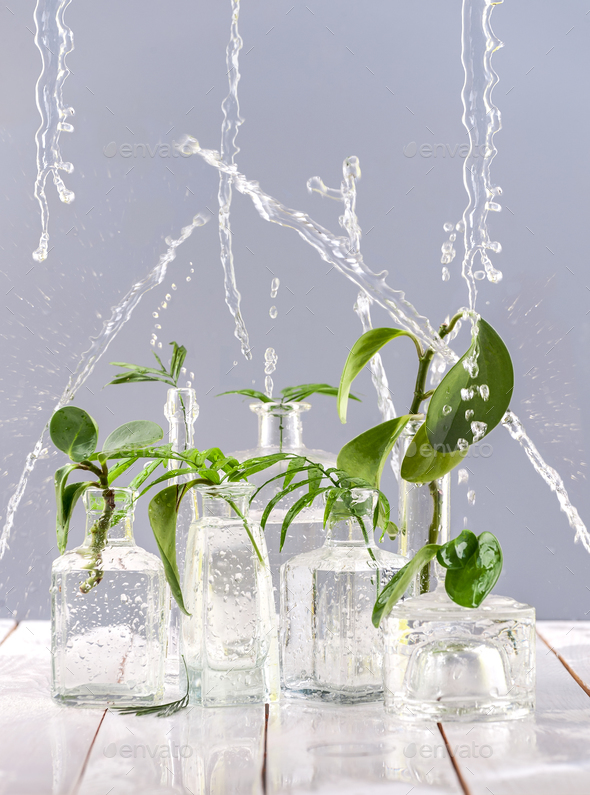 Green leaves in glass vases and bottles under the spray of water - Stock Photo - Images