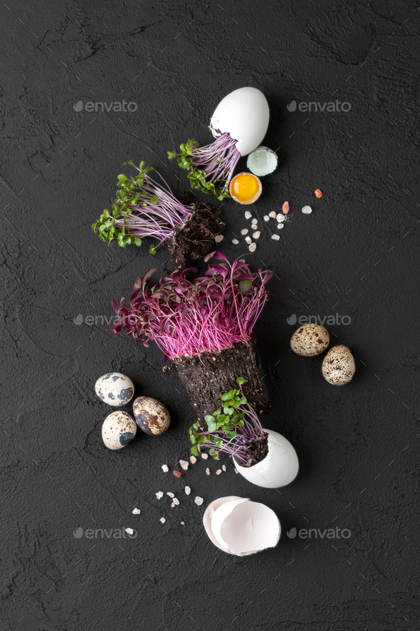Fresh chicken and quail eggs and watercress on a black backgroun - Stock Photo - Images